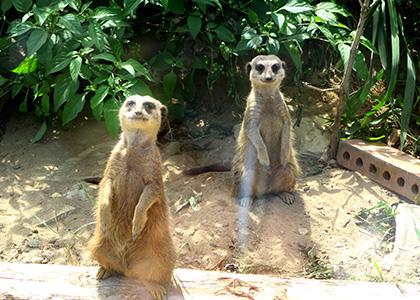 秋田の動物園、大森山動物園の楽しみ方。